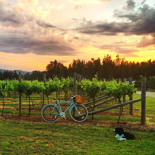 Hunter Valley private tour wine vineyard
